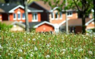 Закон о приватизации дачных домиков