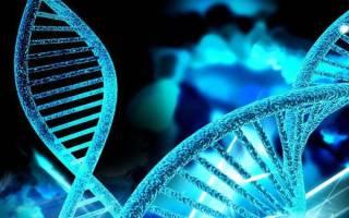 При аутосомно доминантном типе наследования ген проявляется 2020 год
